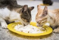 Bahaya-Kucing-Makan-Nasi