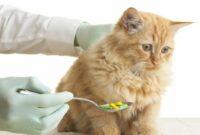 Bahaya-Obat-Manusia-Untuk-Kucing