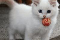 Cara-Bermain-dengan-Kucing-Dirumah