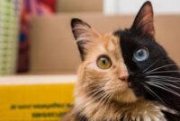 Cara-Memelihara-Kucing-Di-Kosan