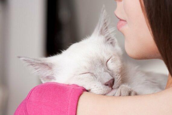 Cara-Mencegah-Virus-Tokso-Pada-Kucing