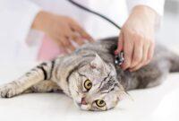 Cara-Menghilangkan-belatung-Pada-Kucing