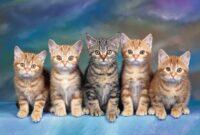 Cara-Menghitung-Umur-Kucing
