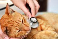 Cara-Mengobati-Kucing-Keracunan-Racun-Tikus