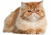 Cara-Menjaga-Mood-Kucing-Agar-Baik