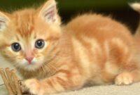 Cara-Merawat-Kucing-Tanpa-Kandang