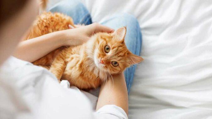 Cara-Merawat-Kucing-di-Rumah