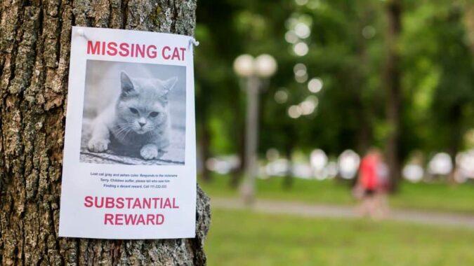 Cara-mencari-Kucing-Yang-Hilang