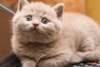 Fungsi-Pembuluh-Darah-Pada-Kucing