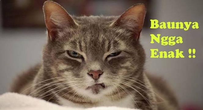 Jenis-Jenis-Bau-Yang-Tidak-Disukai-Kucing