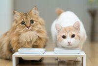 Manfaat-Keju-Untuk-Kucing-Persia