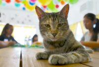 Manfaat-Kucing-Untuk-Lingkungan