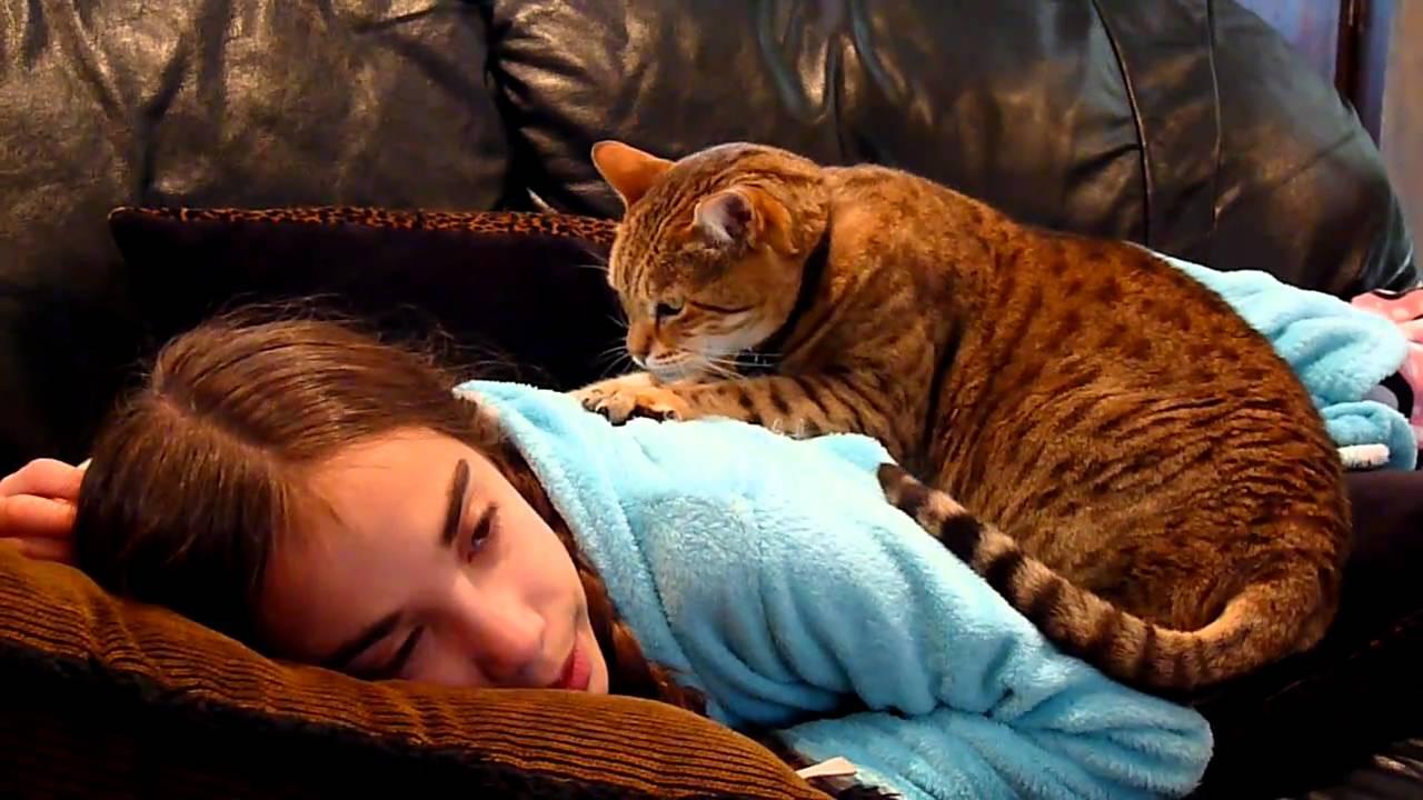 Manfaat-Kucing-dalam-Kehidupan-Sehari-Hari