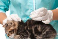 Manfaat-Suntik-Jamur-Pada-Kucing