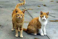 Penyebab-Ekor-Kucing-Bengkok