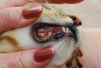Penyebab-Gigi-Kucing-Lepas