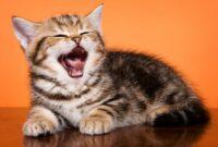 Penyebab-Suara-Kucing-Hilang
