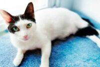 Tips-Dalam-Merawat-Mata-Kucing