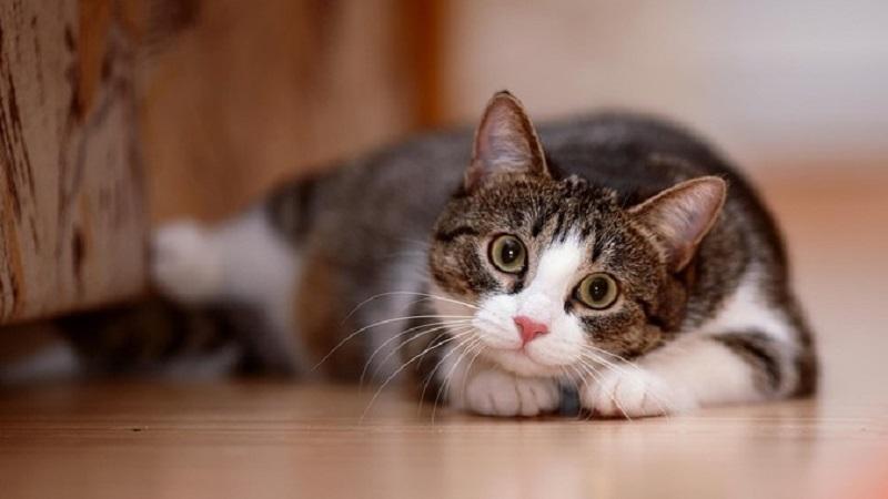 Virus-Bahaya-Untuk-Kucing
