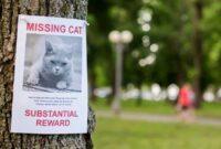 Bagaimana-Cara-Mencari-Kucing-Yang-Hilang