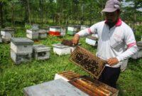 Cara-Beternak-Lebah-Madu-Modern