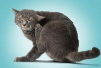 Cara-Mengatasi-Gatal-Pada-Kucing