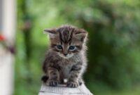 Cara-Merawat-Kucing-Yang-Baru-Diadopsi