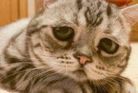 Mengatasi-Kucing-Stress-Karena-Pindah-Pemilik