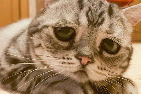 Kucing Stress Setelah Di Adopsi Ini Cara Mengatasnya