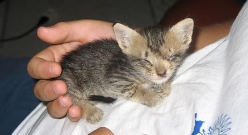 Penyebab-Anak-Kucing-Terlahir-Buta