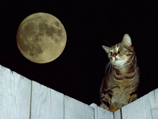 Penyebab-Kucing-Mengeong-terus-Tengah-Malam