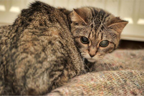 Penyebab-Mata-Kucing-Tertutup-Setengah