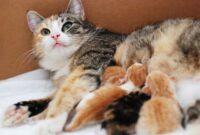 Perilaku-Kucing-Setelah-Melahirkan