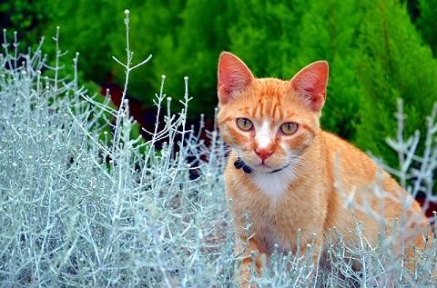 Tanaman-Yang-Tidak-Disukai-Kucing