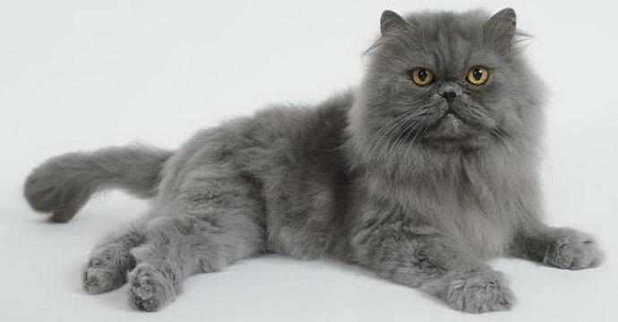 Fungsi-Vitamin-B-untuk-Kucing