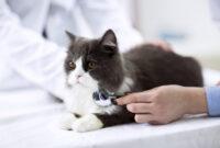 Jenis-Virus-Pada-Kucing