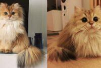 Vitamin-Bulu-Kucing-Agar-Bagus