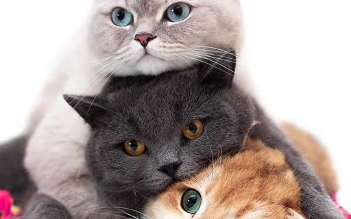 Cara-Membuat-Kucing-Akrab-Dengan-Kucing-Lain