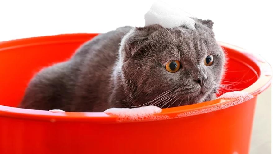 Efek-Shampo-Pada-Kucing