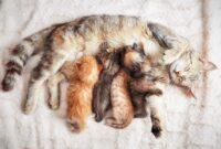 Tips-Makanan-Untuk-Kucing-Menyusui