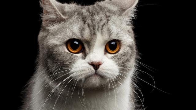 Cara-Agar-Kucing-Tidak-Stres