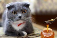 Efek Madu Pada Kucing