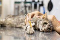 Cara-Mengatasi-Cacing-Pita-Pada-Kucing