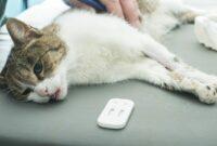 Cara-Mengatasi-Sesak-Pada-Kucing