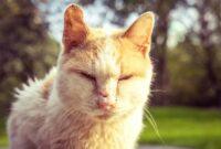 Cara Mengobati Scabies Mulut Pada Kucing