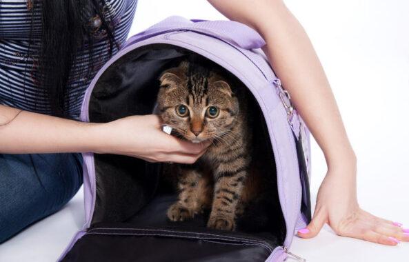 Cara-Membawa-Kucing-Perjalanan-Jauh
