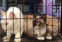 Cara-Membeli-Kucing-Di-Pet-Shop