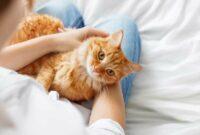 Manfaat-Memelihara-Kucing-Dalam-Rumah
