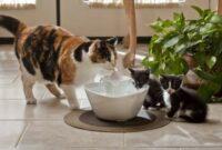 Tanda-Dehidrasi-Pada-Kucing