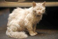 cara-menghilangkan-jamur-pada-kucing